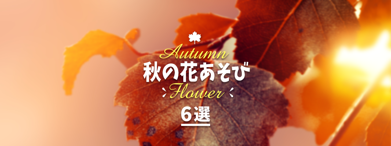秋の花あそび