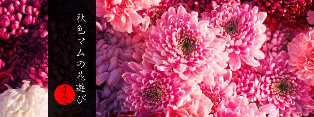 秋色マムの花遊び4選