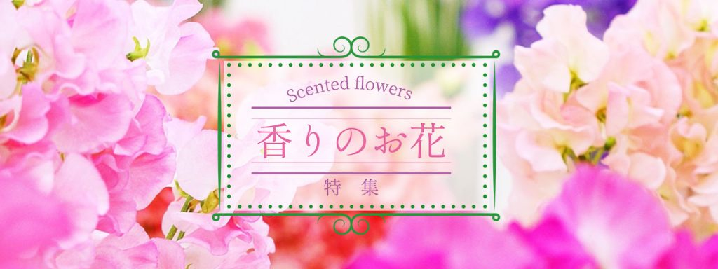 香りのお花特集